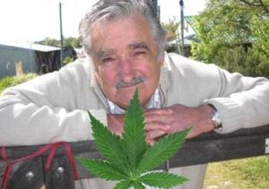 uruguay-marihuana-1