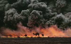 """Ahmadi Oil Fields, Kuwait, 1991 Sandwiched between blackened sand and sky, camels search for untainted shrubs and water in the burning oil fields of southern Kuwait. Their desperate foraging reflects the environmental plight of a region ravaged by the gulf war. Canby, Thomas Y. (August 1991). """"The first Gulf War taught us a new lesson in unconventional conflict. Saddam Hussain's army filled the skies of southern Kuwait with black poignant smoke from the burning oil lines. It was a powerful, debilitating symbol. And there was another. McCurry, who was covering the war, saw camels running in terror from the fires. Both images -whether of the fires or of the animals- were powerful representations of the chaos of that time. Central to McCurry's reputation as a journalist is his discipline to wait, and to search, and then to recognize the most telling image. The juxtaposition of the fire and smoke and camels running amok creates an icon of that war."""" - Phaidon 55 National Geographic, Vol. 180, No. 2, 2-3, 2005, August 1991, The Persian Gulf: After the Storm, Phaidon, 55, Iconic Images, final book_iconic, final print_milan"""