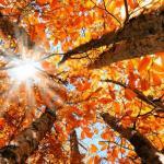 Crisi: l'autunno infinito dell'emisferoboreale